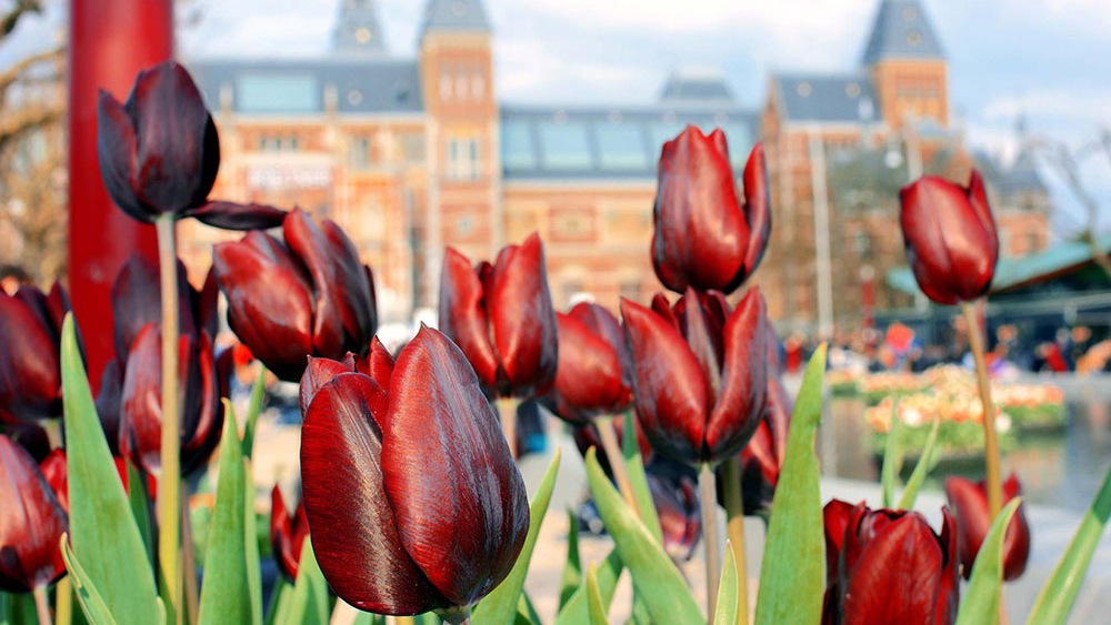 10 tipů, co dělat a vidět v Amsterdamu